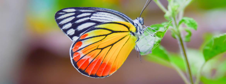 Giorgio Nardone - cambiamento foto farfalla